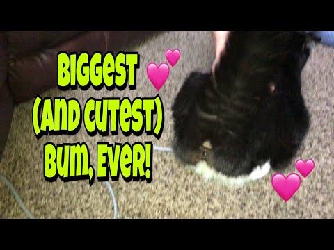 BIGGEST BUM, EVER! | Vlog | April 9, 2018 | Traci B