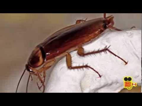 How to Keep Cockroaches Out of Your Home
