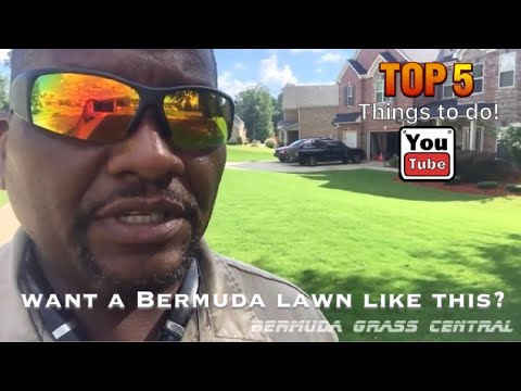Want a Bermuda Lawn like this? Top 5 Tips