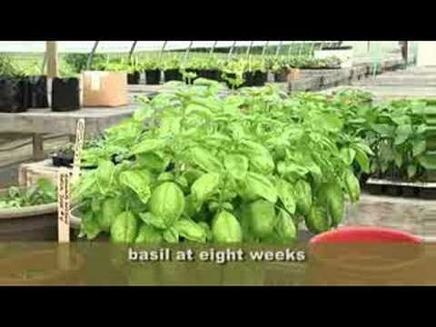 How To Grow The Perfect Herb Garden