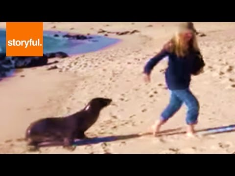 Sea Lion Chases Woman Around Beach (Storyful, Wild Animals)