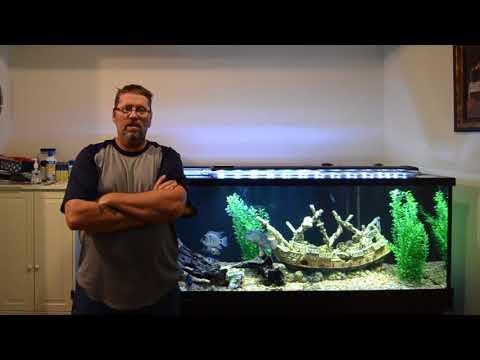Jeff's 135-gallon Cichlid Tank