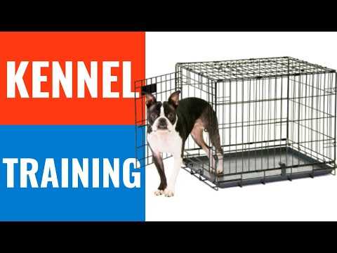 How to Crate Train a Puppy Without Treats