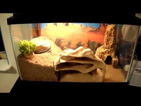 Leopard Gecko cage setup!!