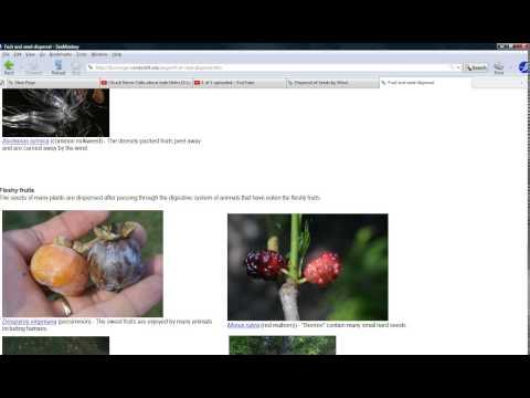 Seed dispersal part 3 The forbidden fruit