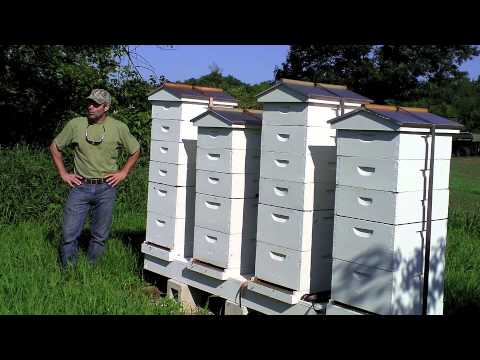 early morning bee hives