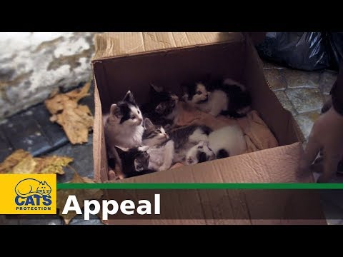 Welcome to the world – Cats Protection appeal
