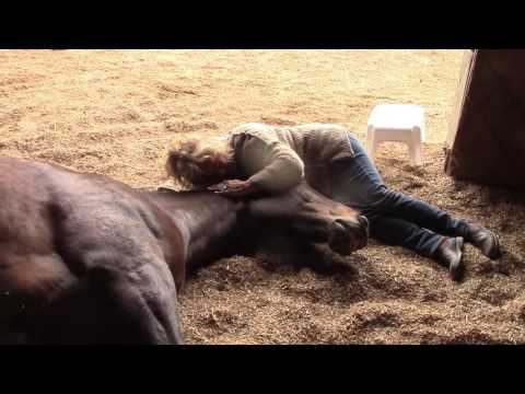 Horses, Peacefully Farting and Snoring 2 - With People!