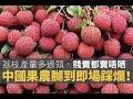 荔枝產量多過頭,平價賤賣都賣唔哂,中國果農嬲到即場踩爛!究竟點解近年生果產量「突然豐收」?【上綱上線】