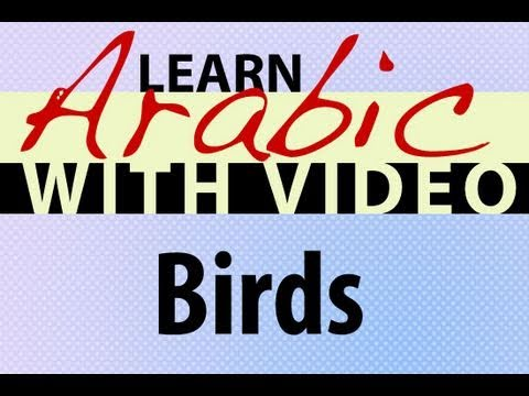 Learn Arabic with Video - Birds