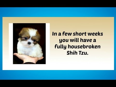 Potty Training Your Shih Tzu Puppy: 4 Different Housetraining Methods Potty Training Shih Tzus