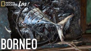 We Are What We Eat: Borneo | Nat Geo Live