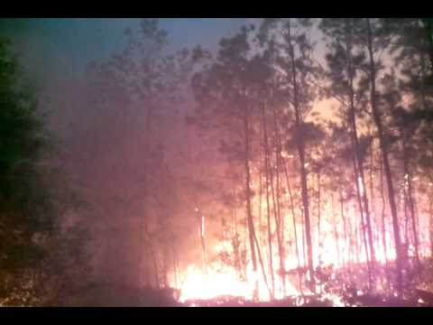 Wildfire 2011 East Texas