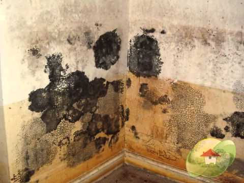 Is Black Mold Dangerous?