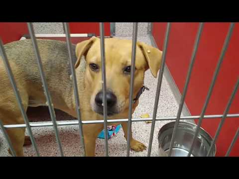 Pima Animal Care Center 5-12-18 Doggie Soon Adoptable - Aldo 5 Yr Old Male Animal#A446185