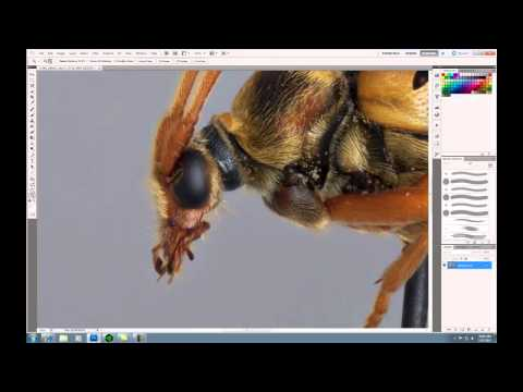 Photoshop: Zoom and Sharpen