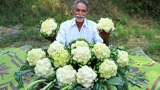 Cauliflower Masala Curry   Cauliflower Curry   Gobi Masala Curry By Grandpa Kitchen