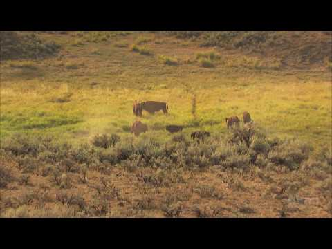Liz Hadly Tracks the Impact of Climate Change in Yellowstone