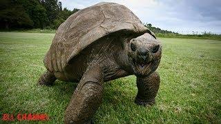 10 ყველაზე მოხუცი ცხოველი რომელიც დღესაც ცოცხალია