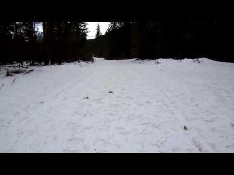 Cougar Bait Skiing