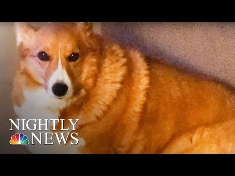 PetSmart Faces Another Dog Death | NBC Nightly News