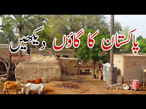 Natural Pakistani Village Life In Punjab | Mud Houses & Green Fields