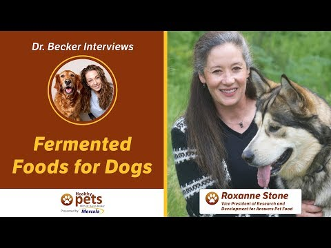 Dr. Becker Interviews Roxanne Stone About Fermented Foods for Dogs