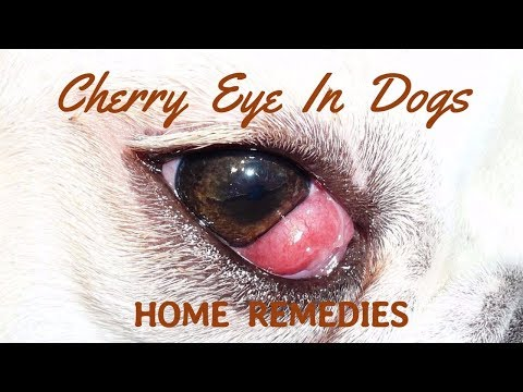 Cherry Eye In Dogs: Natural Home Remedies