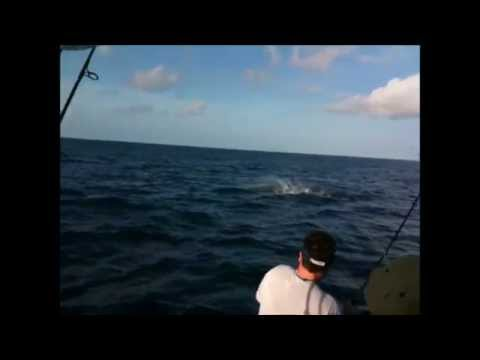 Florida Keys Fishing  - Sailfish