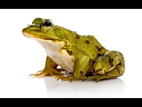 How to make paper frog which can jump high