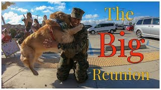 Golden Retriever Welcomes His Marine Home | Oshies World