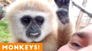Funniest Monkey and Primate Videos of 2018   Funny Pet Videos