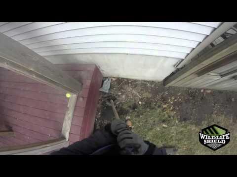 Raccoons Under Deck – Deck Exclusion – Wildlife Shield