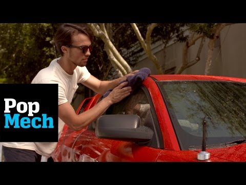 The Dog-Approved Way to Keep Your Car Clean | PopMech