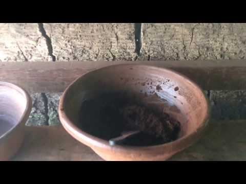 How the most expensive Luwak Coffee is made, Bali coffee plantation
