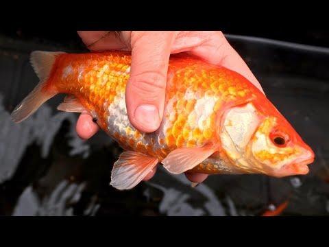Fish Rescue - Episode 4
