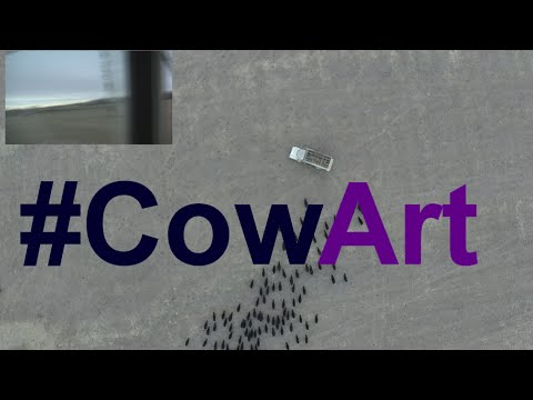 Cow Art with a drone