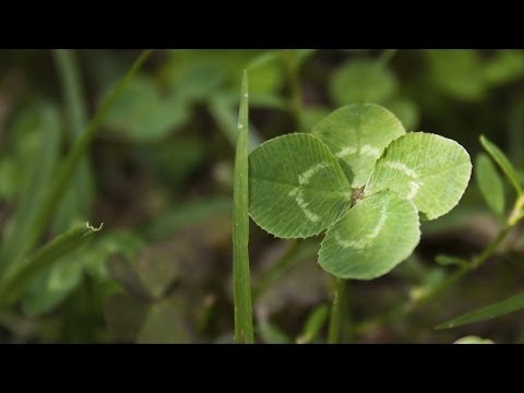 How Science Can Help You Find a 4-Leaf Clover - Instant Egghead #64