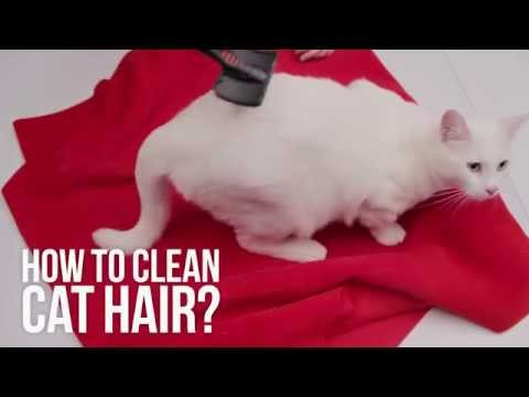 How to clean cat hair I DIY
