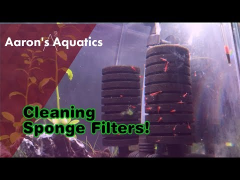 Sponge Filter Cleaning