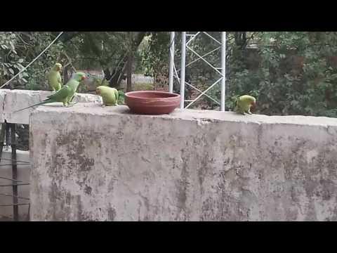 Water for birds in summer