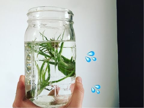 AIR PLANT WATERING & TIPS 🌿💦