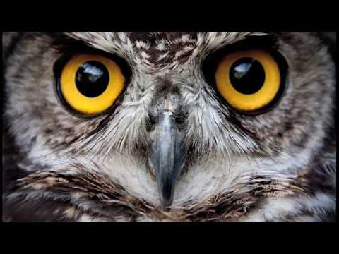 What's so awesome about owls?