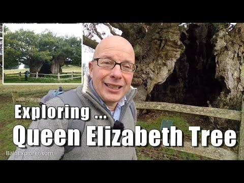 Walks in Sussex: Queen Elizabeth Tree, Cowdray Park, West Sussex