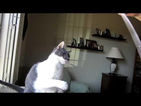 Pet Sitter, Pet Sitting, Dog Sitting, Dog Sitter,Phoenix, Glendale, Tolleson, Avondale, AZ