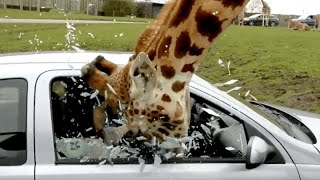 OMG NOT POSSIBLE! - CRAZIEST and FUNNIEST WILD ANIMALS