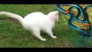 TOP screen seri Cat fight snake to end  wwe