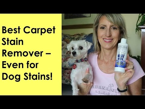 BEST CARPET STAIN REMOVER - EVEN FOR DOG STAINS!