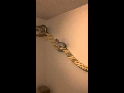 Cat Wall Climber