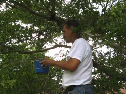 Removing Swarm From Tree